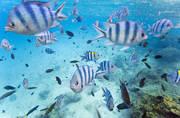 el nido, shimizu island, fish, snorkeling, underwater, palawan, reef