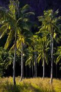 el nido, palm trees, palawan, beach, tour b, pinagbuyutan island, sunset, cliffs
