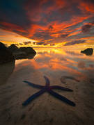 etu moana,blue starfish,aitutaki,aitutaki photos,cook island photos,tide pool,sunset