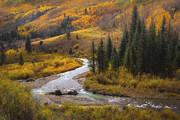 Aspens, fall, Colorado, San Juan, Telluride, Ouray, Rocky Mountains, Autumn, river