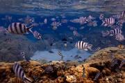bora bora, snorkeling, fish, underwater, coral gardens, tahiti