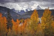 aspens, Colorado, fall, autumn, snow, Molas Pass, storm, San Juan, rocky mountains, Ouray, Durango, Animas, Telluride