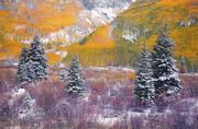 Colorado, aspens, fall, autumn, snow, meadow, San Juan, Ouray, Telluride, Durango, Rocky Mountains