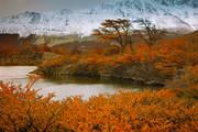 patagonia,autumn,fall,trees,otono,lago capri,el chalten,los glaciares