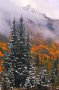 aspens, fall, Colorado, snow, San Juan, Mountains, fog, mist, September