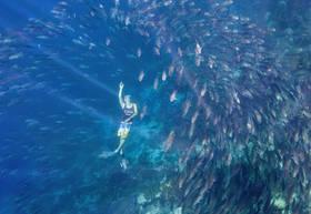 raja ampat, diving, snorkeling, kri island, yenkoranu, fish ball, cape kri