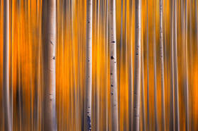The Parallel Forest