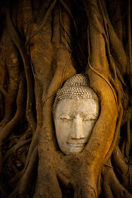 buddha head, trees, ayutthaya, ruins, culture, thailand, buddhism, ancient, asia