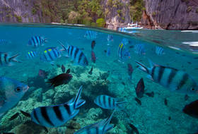over under, underwater photography, el nido, snorkelling, diving, split level, palawan