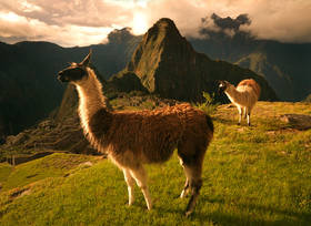llama,machu picchu,sunset,inca,lost city,ancient ruins, peru,lost civilization,empire
