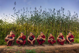 monks, fields, bagan, burma, myanmar, culture, work, rural