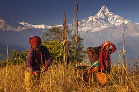 Mountain Harvest