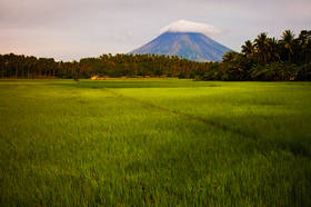 mt mayon, legaspi, rice fields, volcano