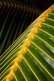 palm, palm abstract,abstract photography, cook island photography,pacific resort