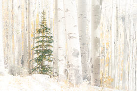 Christmas Tree, autumn, leaves, aspens, fall, ornaments,  San Juan Mountains, Colorado, Telluride, Ouray, Lake City, painting, snowstorm