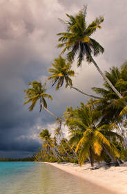 Tuamotu Palm Beach