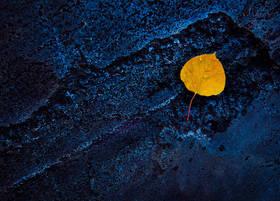 Midnight Aspen
