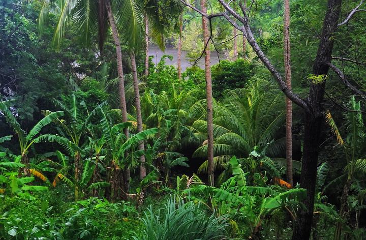 apo island, beach, rainforest, palms, dumaguete, photo
