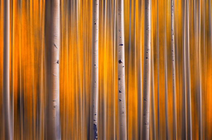aspens, Colorado, abstract, forest, denver, orange, fall, autumn, photo