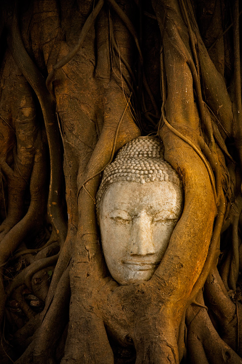 buddha head, trees, ayutthaya, ruins, culture, thailand, buddhism, ancient, asia, photo