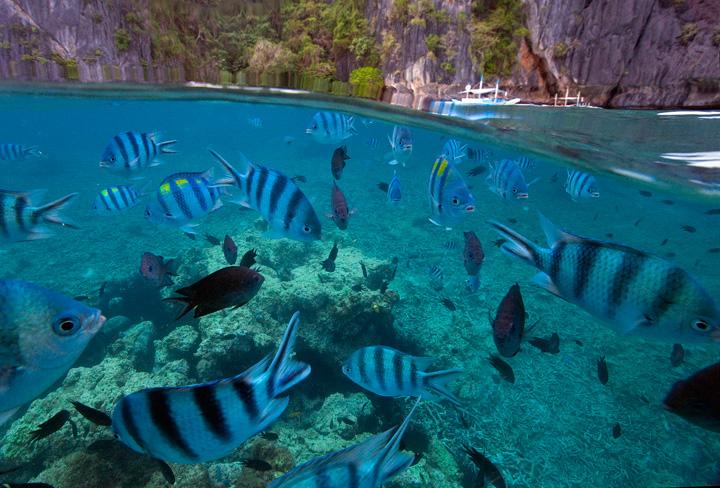 over under, underwater photography, el nido, snorkelling, diving, split level, palawan, photo