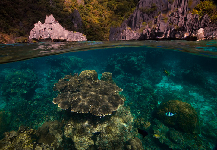 el nido, palawan, underwater, photo, coral, over under, split level, lagoon, philippines, photo