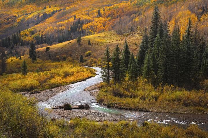 Aspens, fall, Colorado, San Juan, Telluride, Ouray, Rocky Mountains, Autumn, river, photo