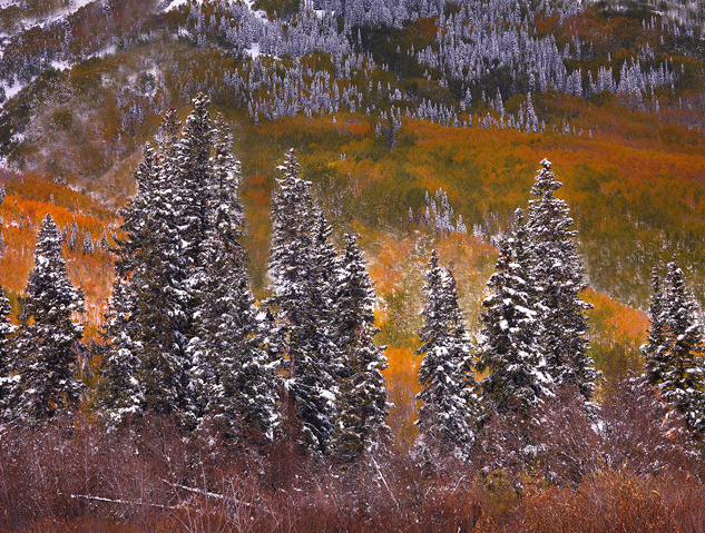 The first snow of the season arrives early, blanketing the autumn foliage in a spectacular contrast of the seasons.