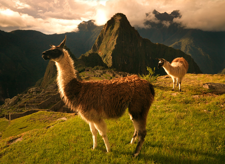 llama,machu picchu,sunset,inca,lost city,ancient ruins, peru,lost civilization,empire, photo