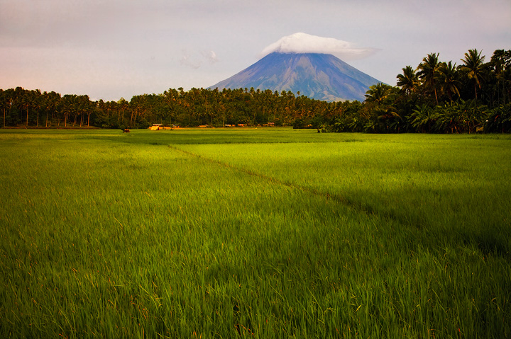 mt mayon, legaspi, rice fields, volcano, photo