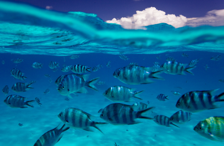 The view under the surface of spectacular Bora Bora Lagoon.