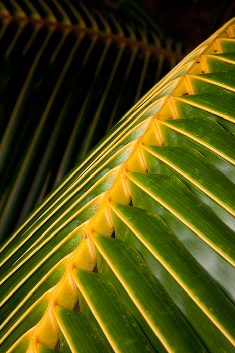 palm, palm abstract,abstract photography, cook island photography,pacific resort, photo