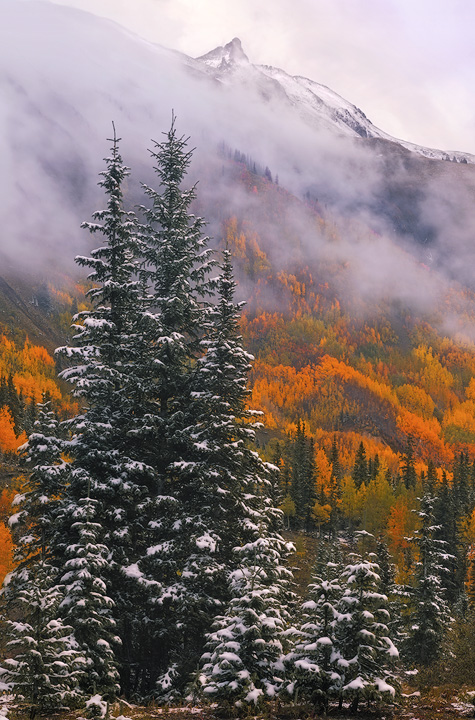 aspens, fall, Colorado, snow, San Juan, Mountains, fog, mist, September, photo