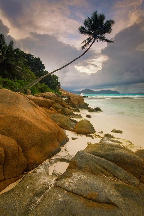 anse severe,la digue,seychelles,island,beach,sunset,palm tree,paradise,whie sand, photo