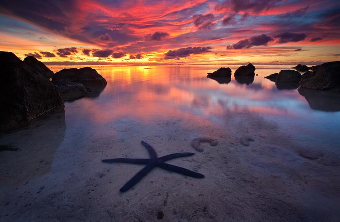 blue starfish,starfish picture,aitutaki photo,aitutaki sunset,pacific resort photo, photo