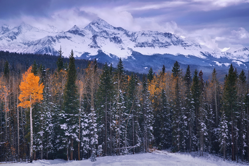 A lone aspen stands against the winter in the San Juan Mountains near Telluride.